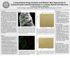 Computational Image Analysis and Western Blot Approaches to Determining Na Channel Expression in Lamprey Spinal Cord...